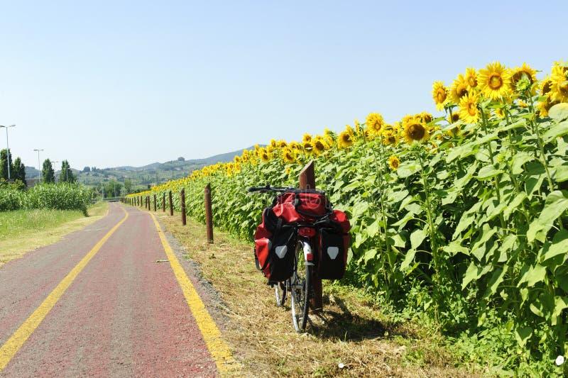 Voie pour des bicyclettes et des tournesols en Toscane image stock