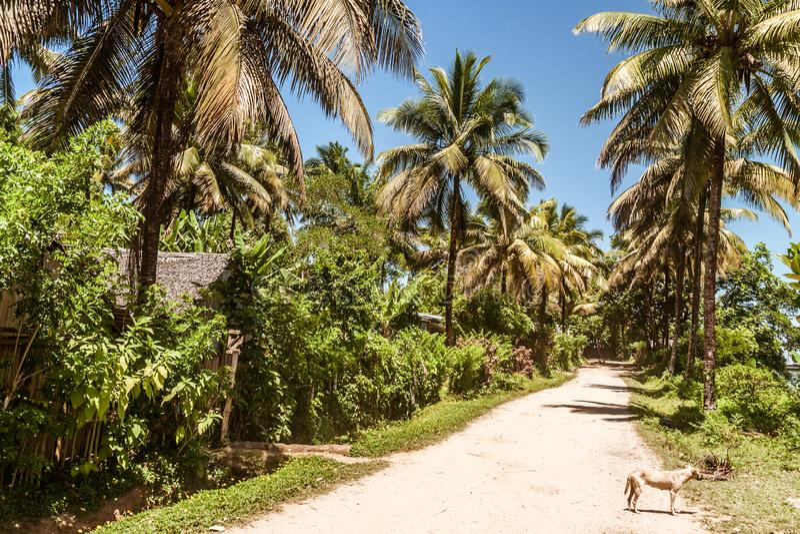 Voie tropicale de palmiers photos libres de droits