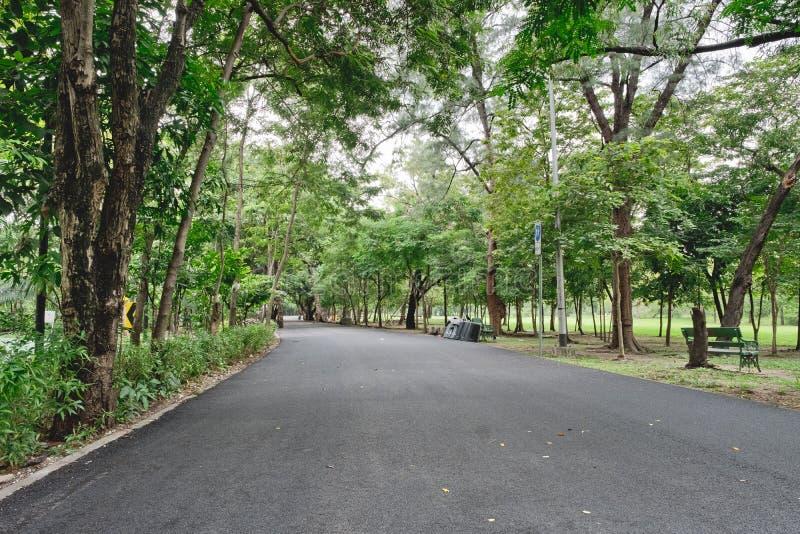 Voies avec les arbres verts, aménageant en parc dans le jardin images stock