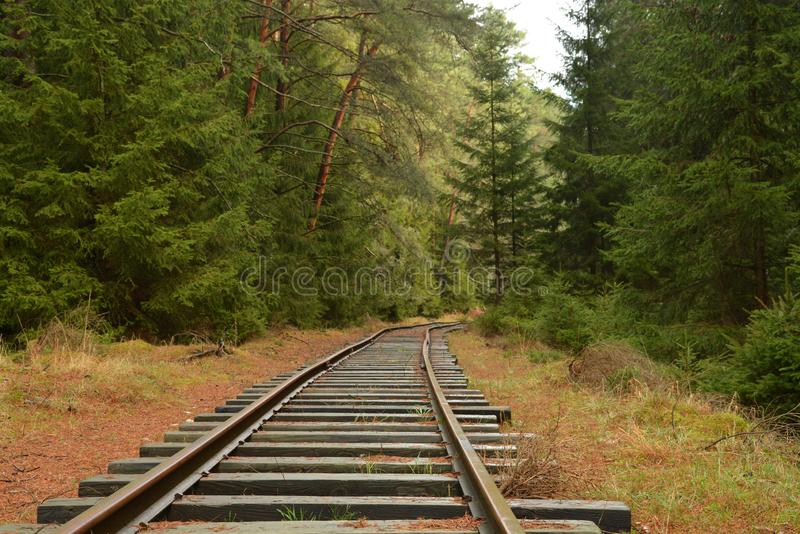 Voies dans la forêt verte photo stock