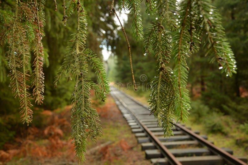 Voies dans la forêt verte images libres de droits