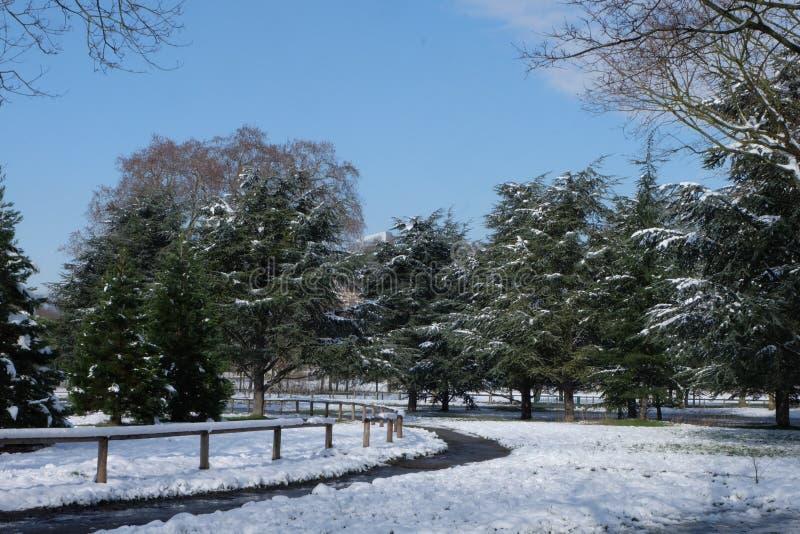 Voies dans les bois pendant l'hiver au Bois de Boulogne, près de Paris, la France image libre de droits
