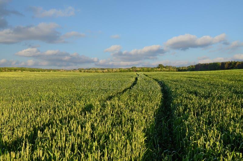 Voies de champ et de tracteur de blé images libres de droits