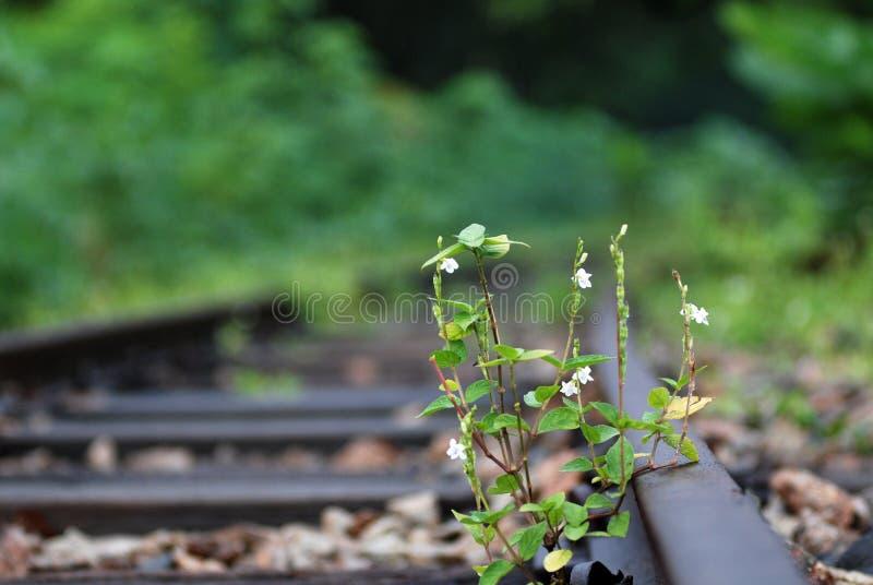 Voies de chemin de fer abandonnées photographie stock libre de droits