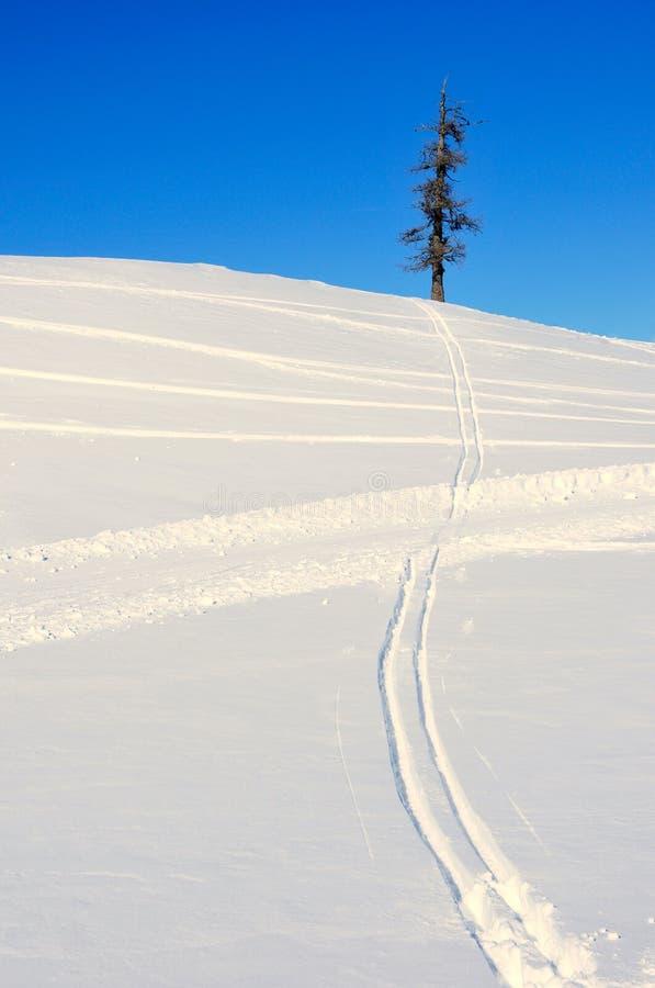 voies de Croix-pays-ski dans la neige photos libres de droits