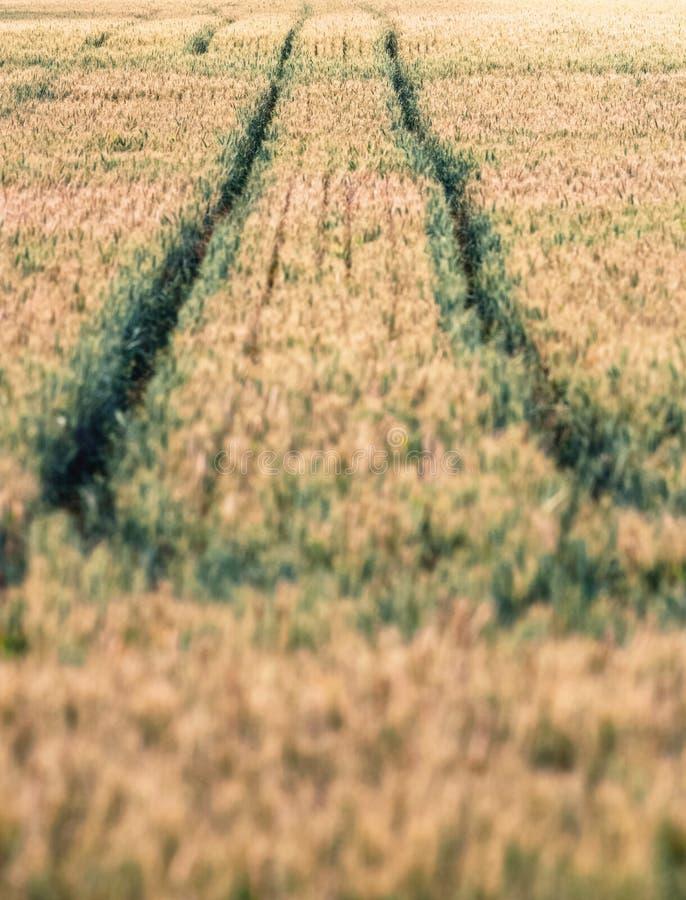 Voies de pneu dans le domaine de blé images stock