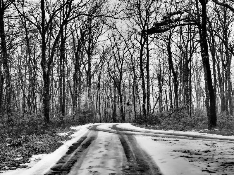 Voies de pneu sur la route couverte par neige par la forêt photographie stock libre de droits
