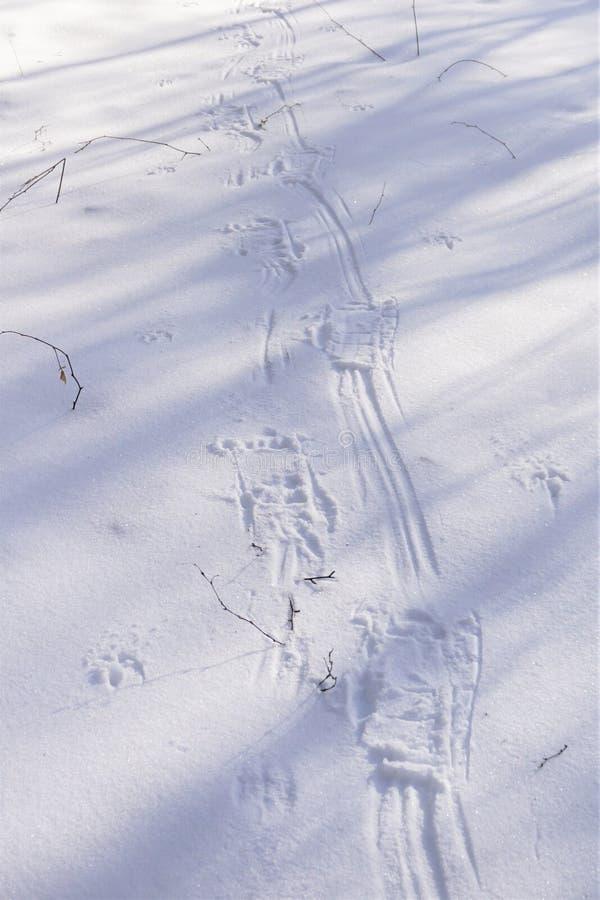 Voies de raquette d'hiver sur la neige croustillante photo libre de droits