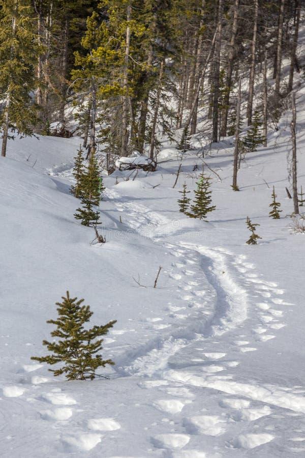 Voies de raquette en vent frais de neige par des arbres images libres de droits