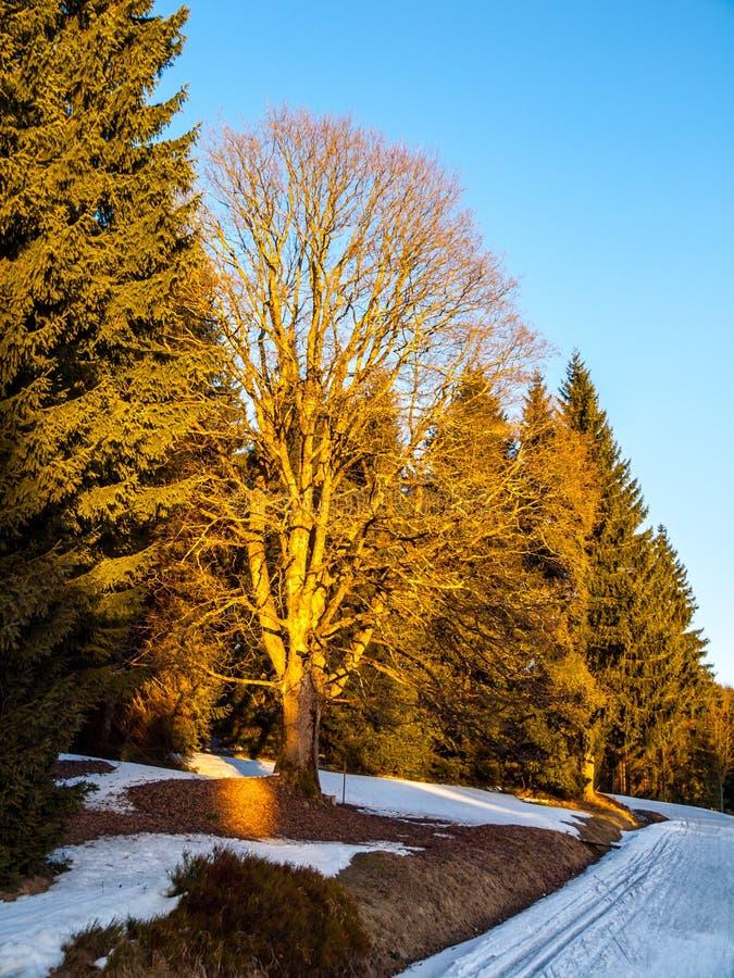 Voies en retard de ski de pays croisé d'hiver Reste de neige la soirée ensoleillée près du village de Kristianov, montagnes de Ji image libre de droits