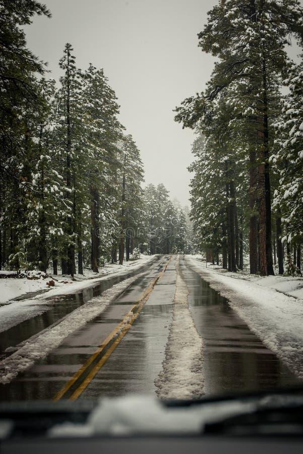 Voies neigeuses simples de pneu - portrait photo libre de droits