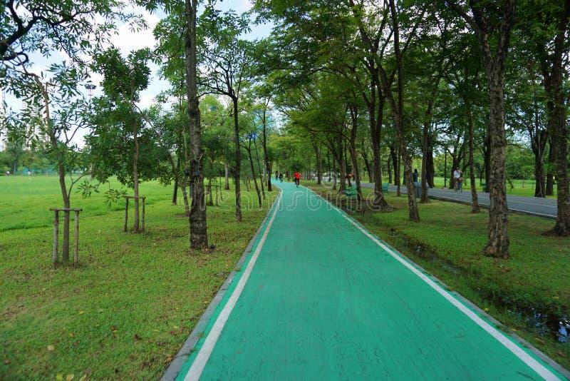 Voies pour bicyclettes en parc de Fai de putréfaction photographie stock libre de droits