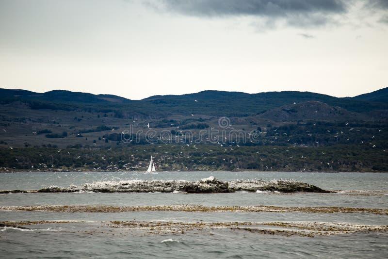 Voilier behing l'île rocheuse avec la colonie de cormoran chez Ushuaia dans la Manche de briquet, Argentine image libre de droits