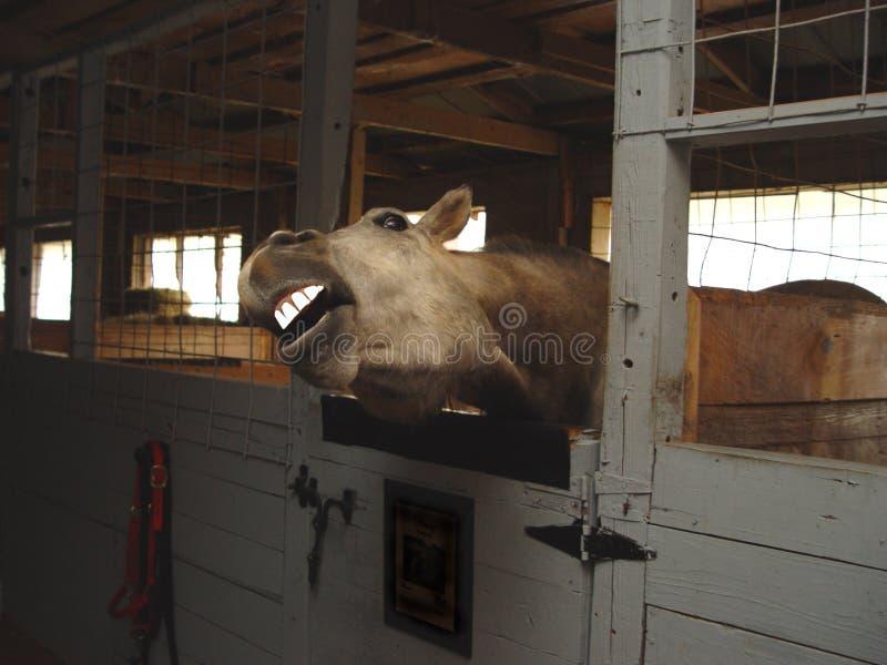 Voir Les Mes Dents Images stock