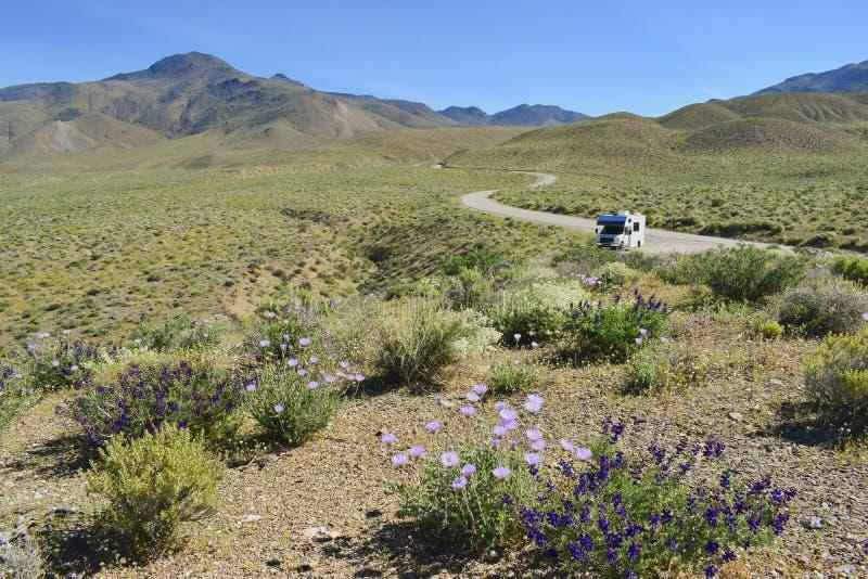 Voiture de campeur sur la route isolée entourée par la belle nature californienne de floraison de ressort photos libres de droits