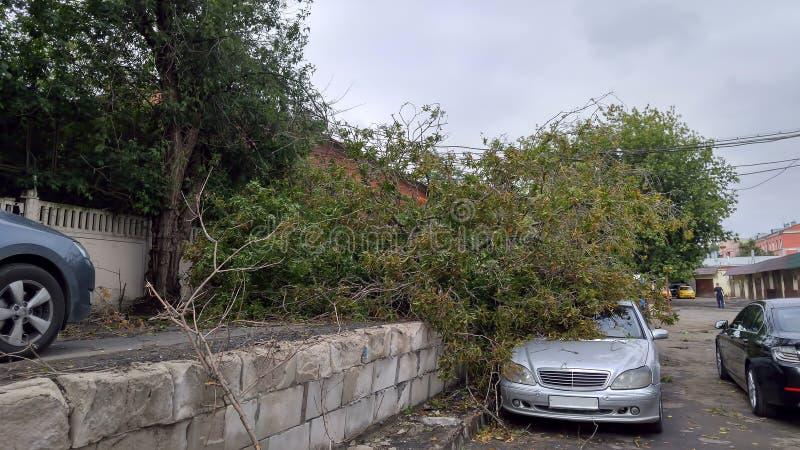 Voiture emprisonnée sous l'arbre tombé après tempête de vent Effets d'ouragan image stock