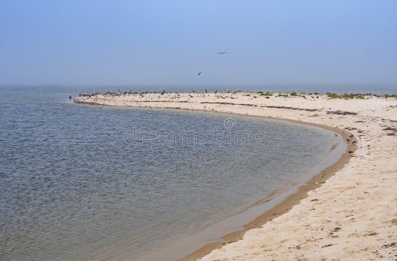 Volée d'oiseau sur une dune de sable à distance photographie stock