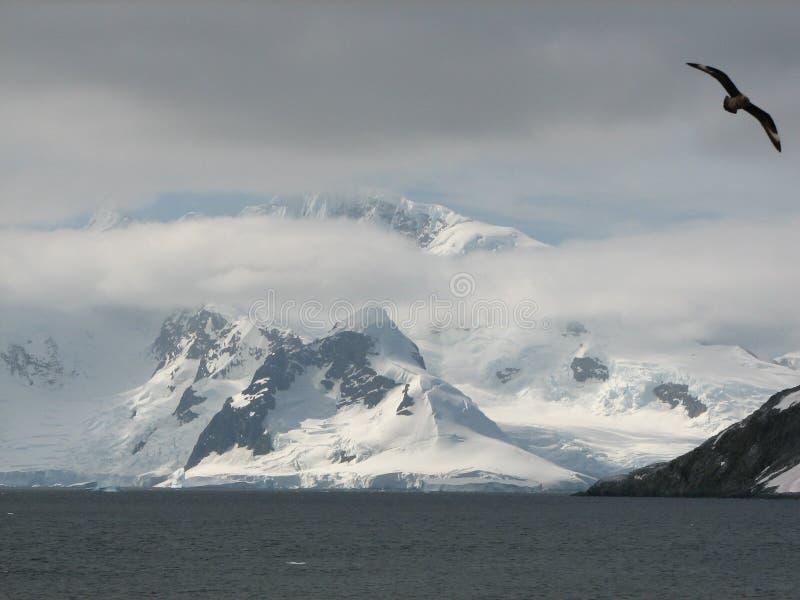 Vol antarctique images stock