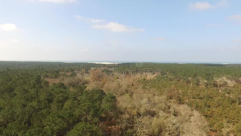 Vol au-dessus d'une forêt de pin banque de vidéos