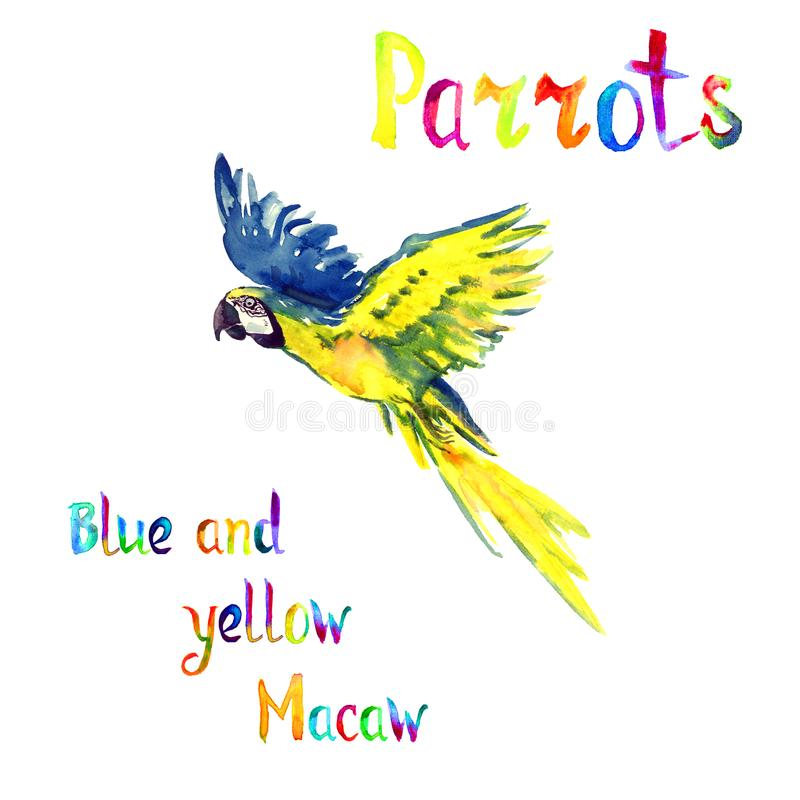 Vol bleu et jaune d'ara illustration libre de droits