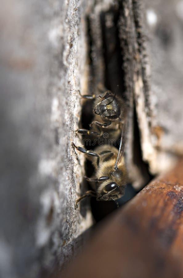 Vol d'abeille images libres de droits
