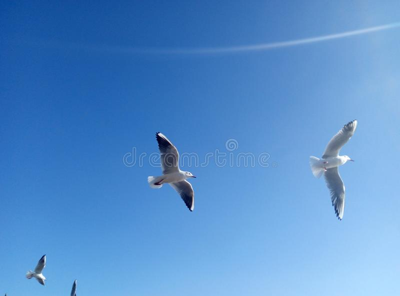 Vol d'oiseau image libre de droits