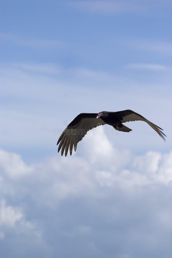 vol d'oiseau images stock