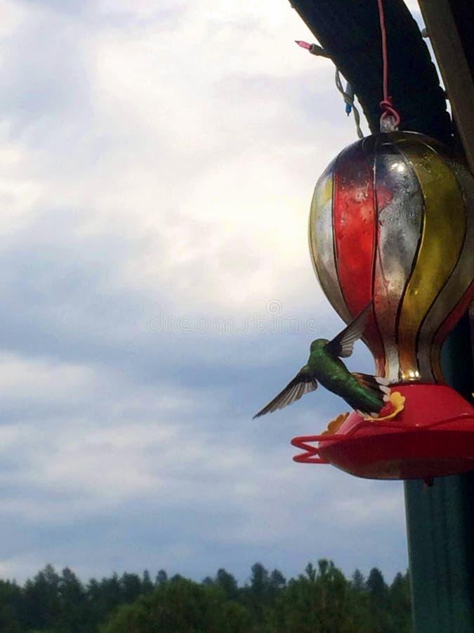 Vol d'oiseau de ronflement mi photographie stock