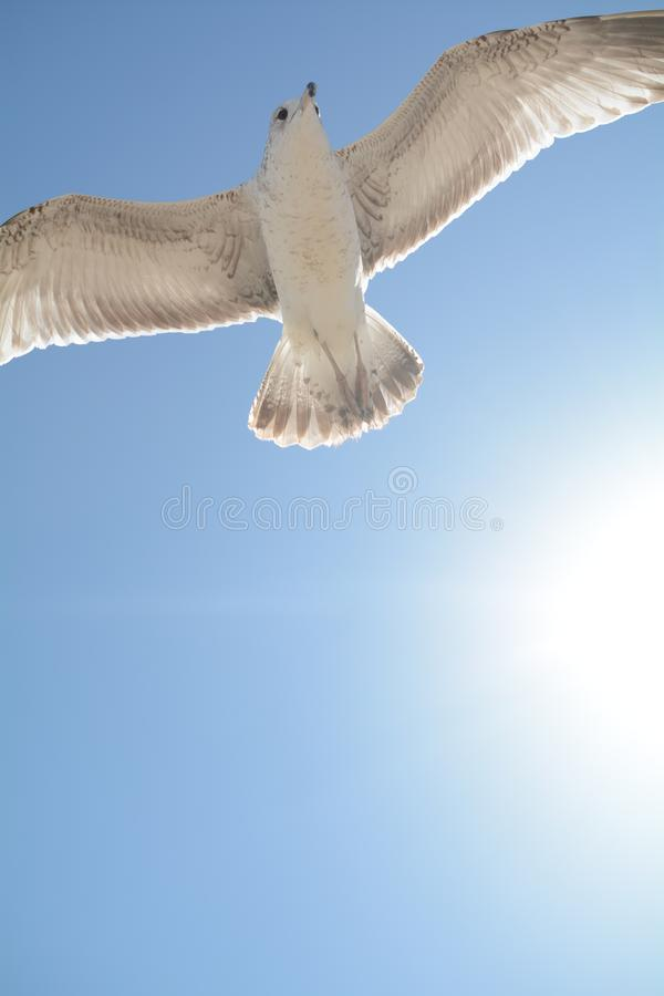 Vol d'oiseau devant le soleil photographie stock libre de droits