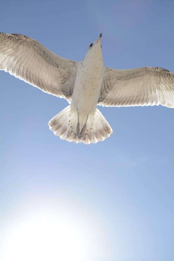 Vol d'oiseau devant le soleil photo libre de droits