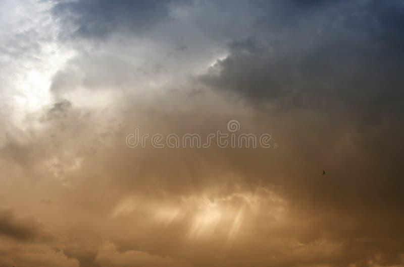 Vol d'oiseau sous le ciel nuageux image stock
