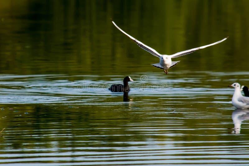Vol d'oiseau vers photographie stock