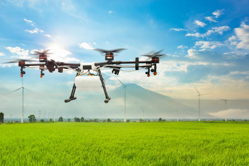 Vol de bourdon d'agriculture sur le gisement vert de riz images stock