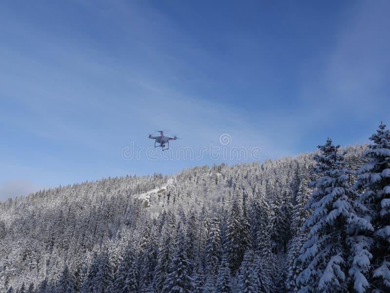 Vol de bourdon en hiver photographie stock libre de droits