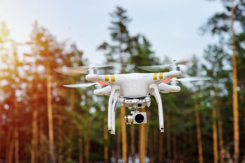 Vol de bourdon sur un fond des arbres forestiers photo stock