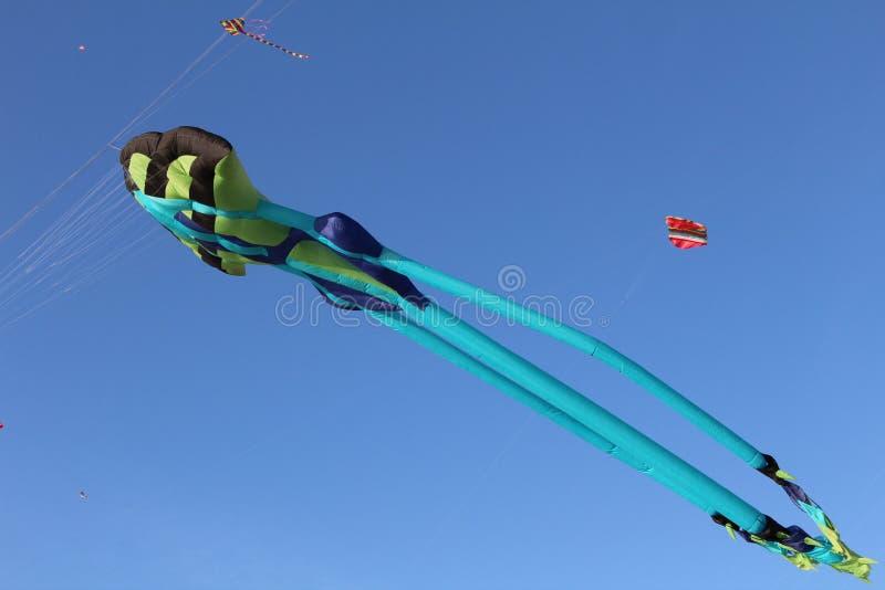 Vol de cerf-volant image stock