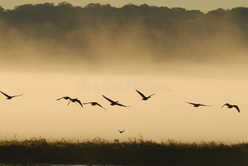 Vol de faune photo stock