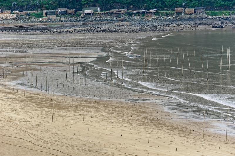 Vol de l'oiseau marin - paysage de Xiapu photo libre de droits