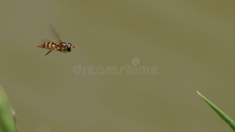 Vol de mouche de vol plané photos stock