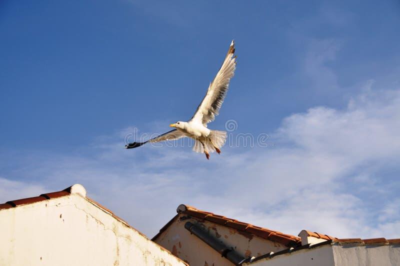 Vol de mouette au-dessus des dessus de toit photographie stock libre de droits