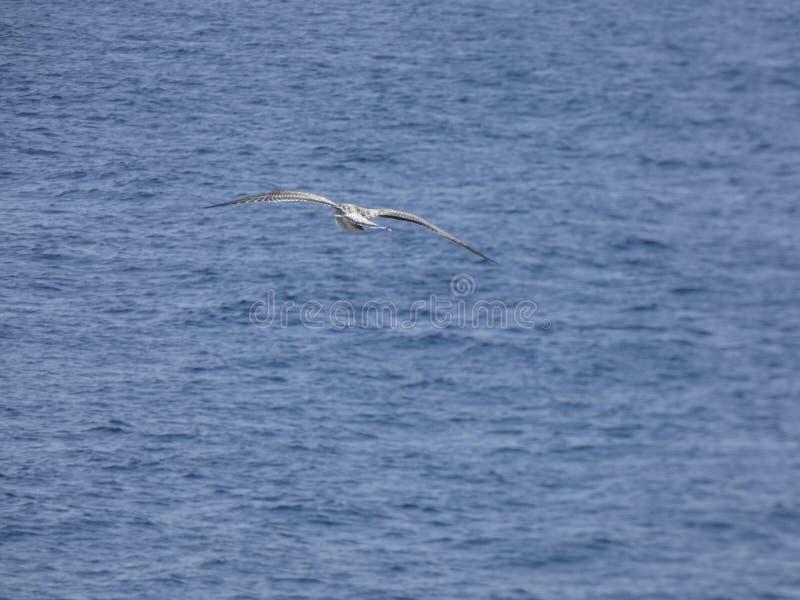 Vol de mouette au-dessus de la mer Méditerranée bleue photos stock