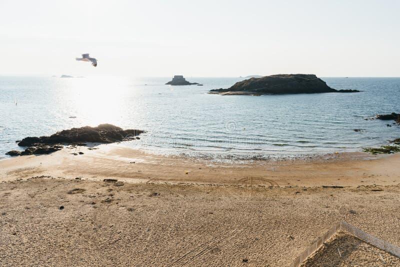 Vol de mouette au-dessus de la plage vide de Saint Malo image stock