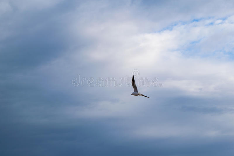 Vol de mouette contre le ciel nuageux dramatique bleu image stock