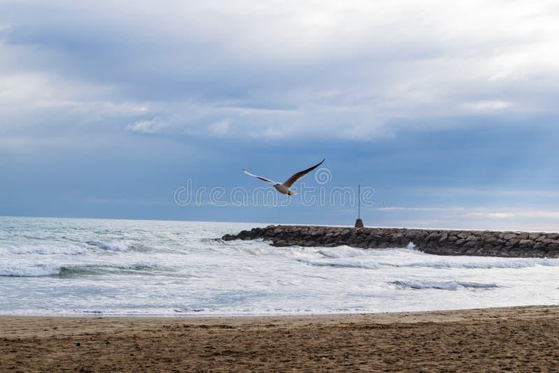 Vol de mouette contre le ciel nuageux dramatique bleu images libres de droits