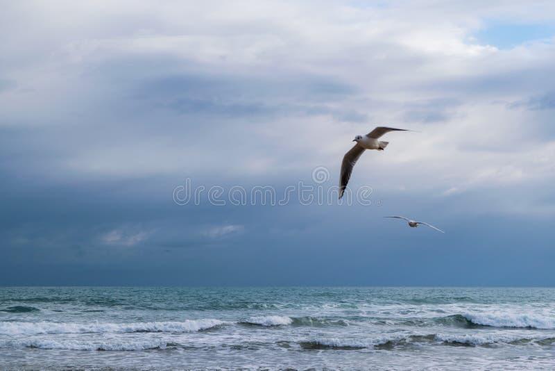 Vol de mouette contre le ciel nuageux dramatique bleu photo libre de droits