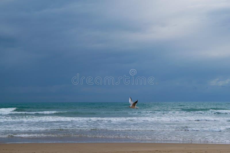 Vol de mouette contre le ciel nuageux dramatique bleu image libre de droits