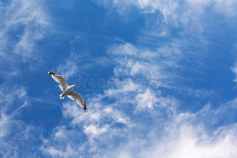 Vol de mouette dans le ciel images stock