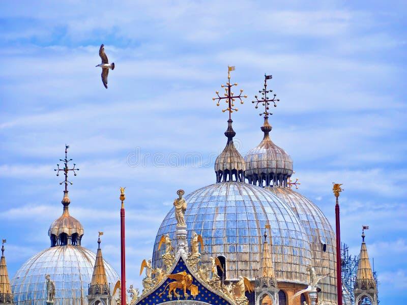 Vol de mouette devant la basilique de St Mark à Venise photographie stock libre de droits