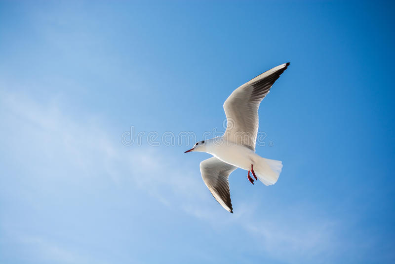 Download Vol De Mouette En Ciel Au-dessus Des Eaux De Mer Image stock - Image du mouette, liberté: 87702671