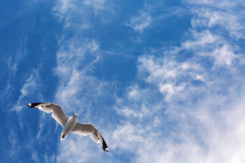 Vol de mouette en ciel de Yhe photographie stock